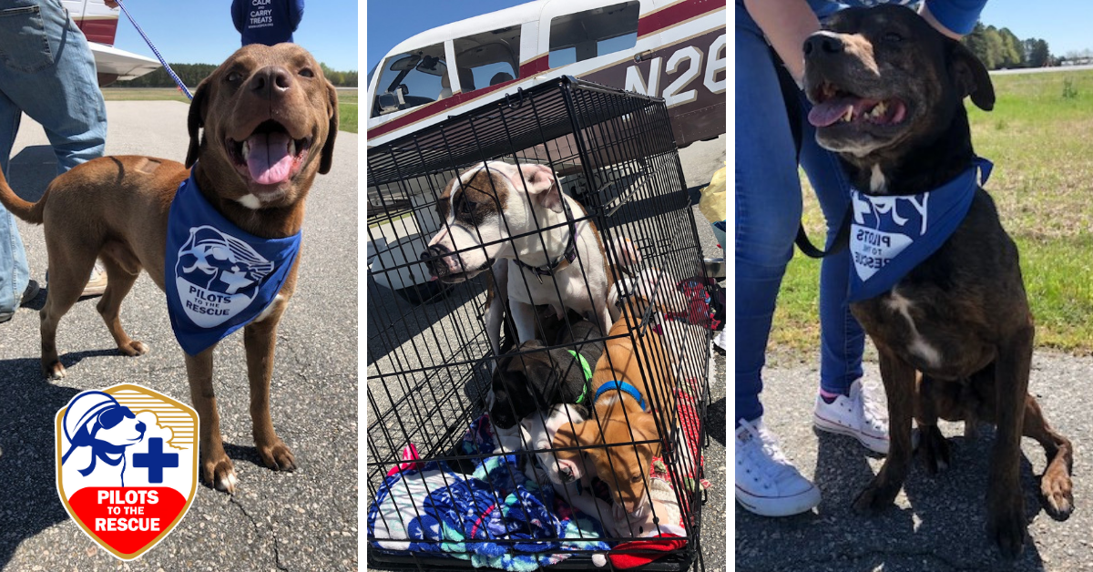 dog family rescued