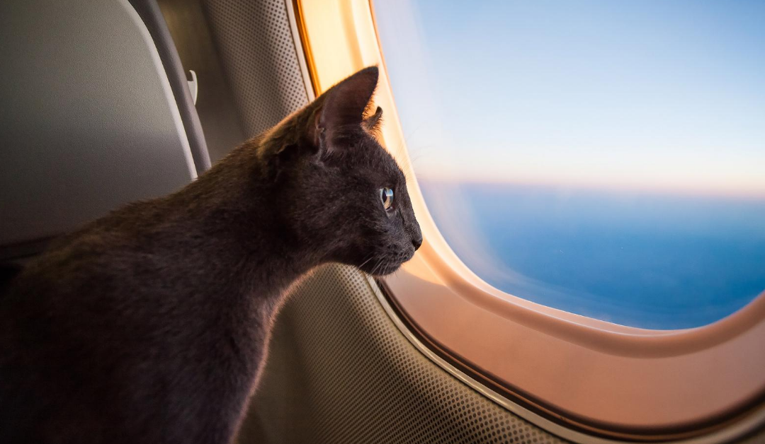 Air Travel Policy Updates for Flying with Pets
