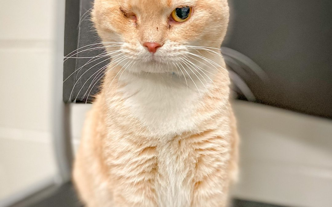 One-eyed kitty finds love and safety thanks to transport by PTTR